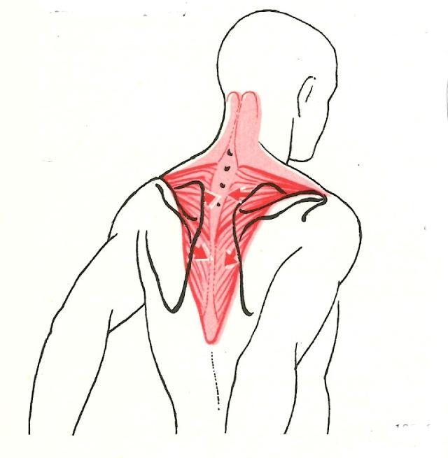 Cviky na trapézové svaly
